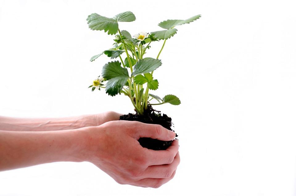 plant-164500_960_720